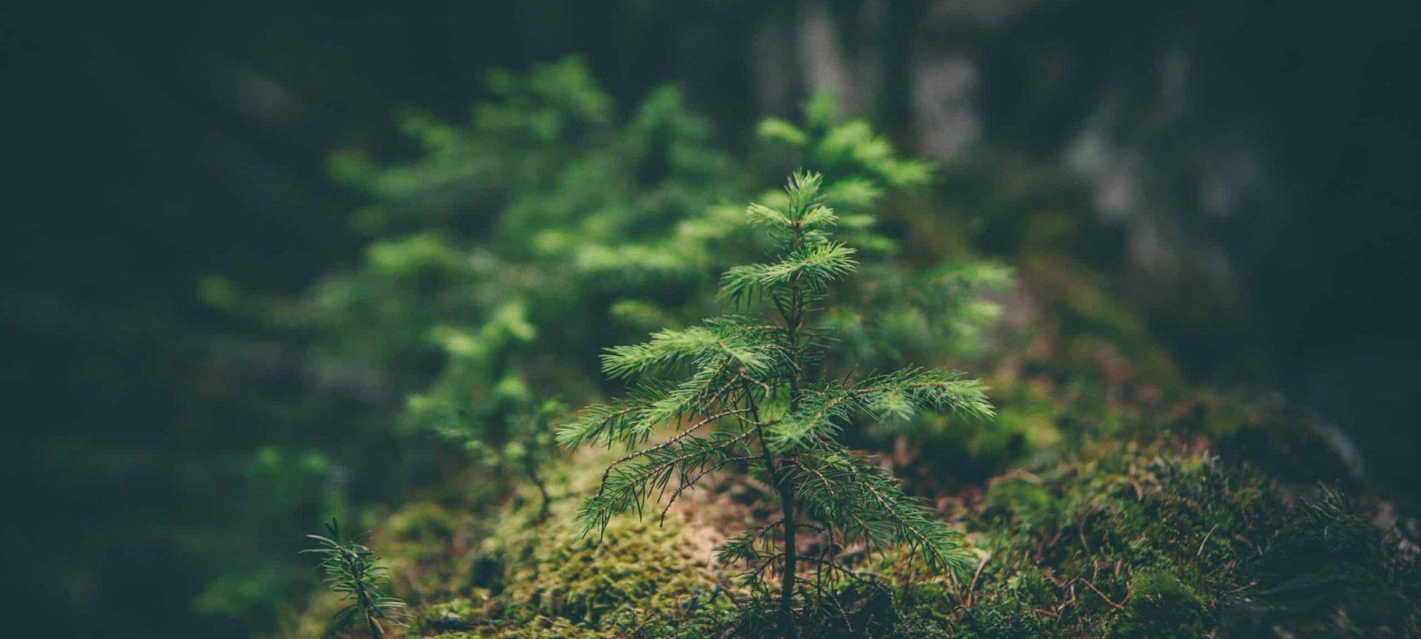 En skog som symbol för miljövänlig flyttfirma med garanti och ansvar
