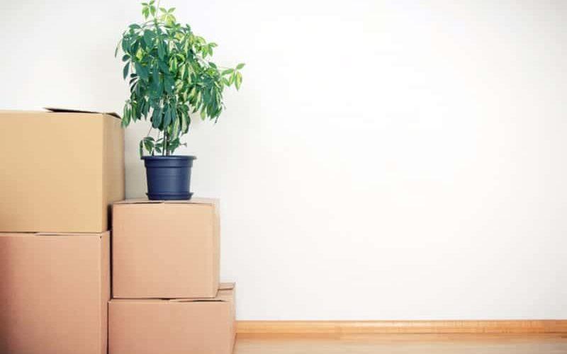 Så här flyttar du dina krukväxter